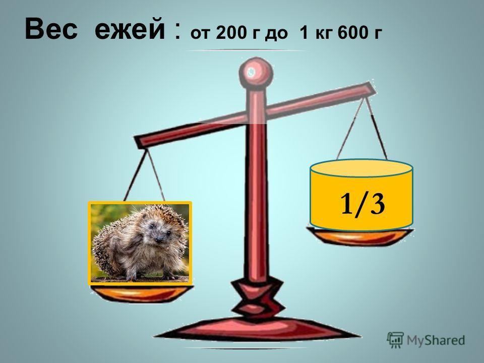 1/3 Вес ежей : от 200 г до 1 кг 600 г