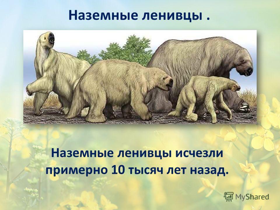 Наземные ленивцы исчезли примерно 10 тысяч лет назад. Наземные ленивцы.