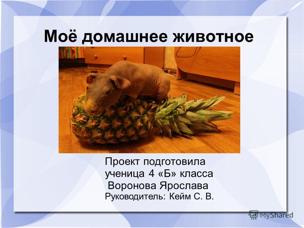 Моё домашнее животное Проект подготовила ученица 4 «Б» класса Воронова Ярослава Руководитель: Кейм С. В.