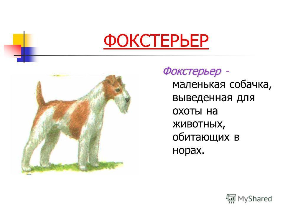 ФОКСТЕРЬЕР Фокстерьер Фокстерьер - маленькая собачка, выведенная для охоты на животных, обитающих в норах.