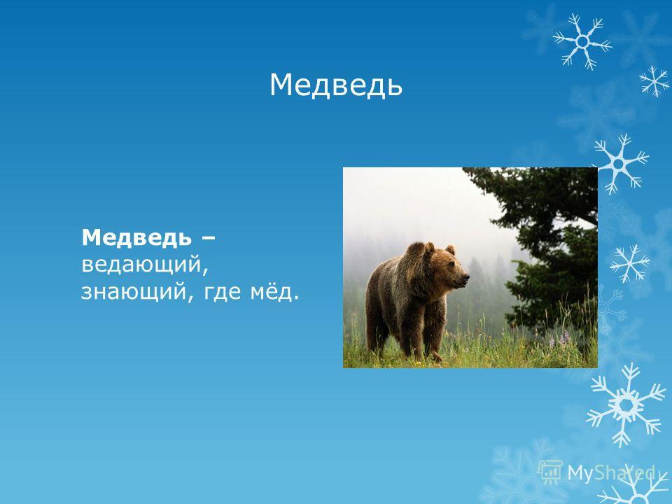 Медведь Медведь – ведающий, знающий, где мёд.