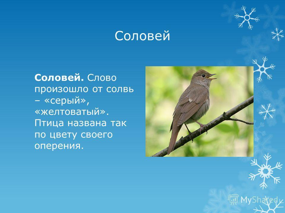 Соловей Соловей. Слово произошло от солвь – «серый», «желтоватый». Птица названа так по цвету своего оперения.