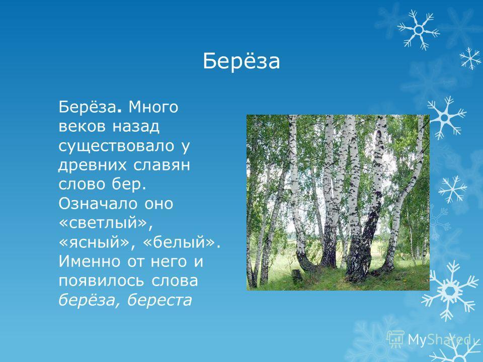 Берёза Берёза. Много веков назад существовало у древних славян слово бер. Означало оно «светлый», «ясный», «белый». Именно от него и появилось слова берёза, береста