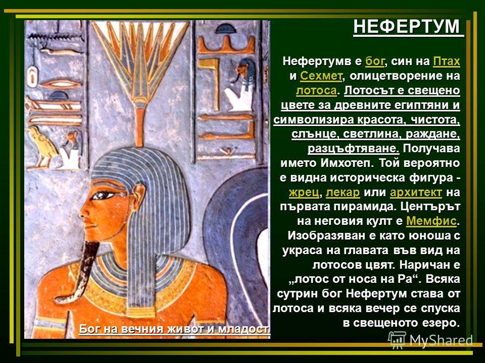 НЕФЕРТУМ Нефертумв е бог, син на Птах и Сехмет, олицетворение на лотоса. Лотосът е свещено цвете за древните египтяни и символизира красота, чистота, cлънце, светлина, раждане, разцъфтяване. Получава името Имхотеп. Той вероятно е видна историческа фи