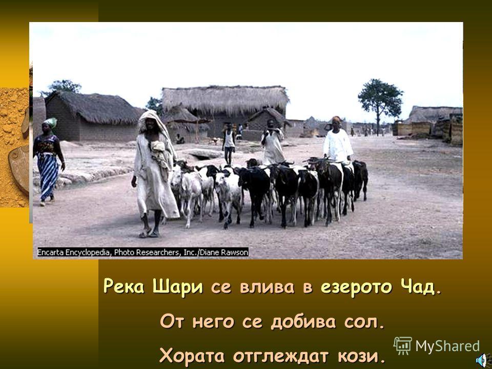 Река Шари се влива в езерото Чад. От него се добива сол. Хората отглеждат кози.