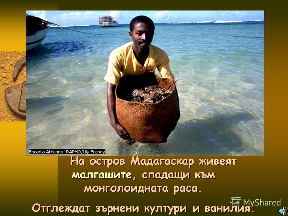 На остров Мадагаскар живеят малгашите, спадащи към монголоидната раса. Отглеждат зърнени култури и ванилия.