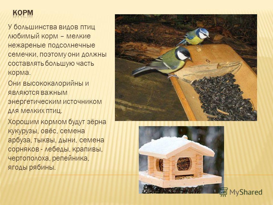 У большинства видов птиц любимый корм – мелкие нежареные подсолнечные семечки, поэтому они должны составлять большую часть корма. Они высококалорийны и являются важным энергетическим источником для мелких птиц. Хорошим кормом будут зёрна кукурузы, ов