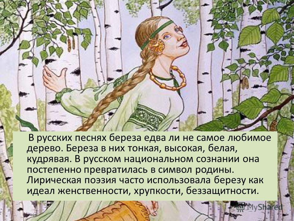 Берёза Наибольшей любовью в русском фольклоре пользуется берёза. В сознании носителя русского языка именно берёза оказывается неким национальным символом.