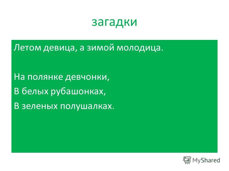 В русских песнях береза едва ли не самое любимое дерево. Береза в них тонкая, высокая, белая, кудрявая. В русском национальном сознании она постепенно превратилась в символ родины. Лирическая поэзия часто использовала березу как идеал женственности,