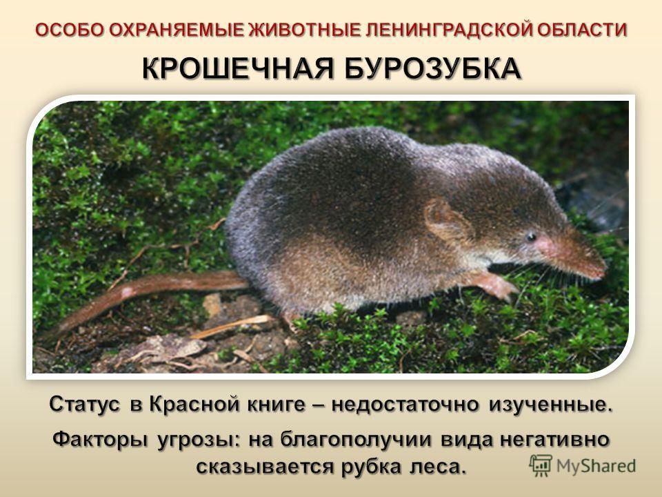 Животный мир Ленинградской области своеобразен. Это связано с географическим положением и разнородностью территории. У нас представлены различные типы таежных лесов, болота ; много водоемов, среди которых крупнейшее пресноводное озеро Европы - Ладожс