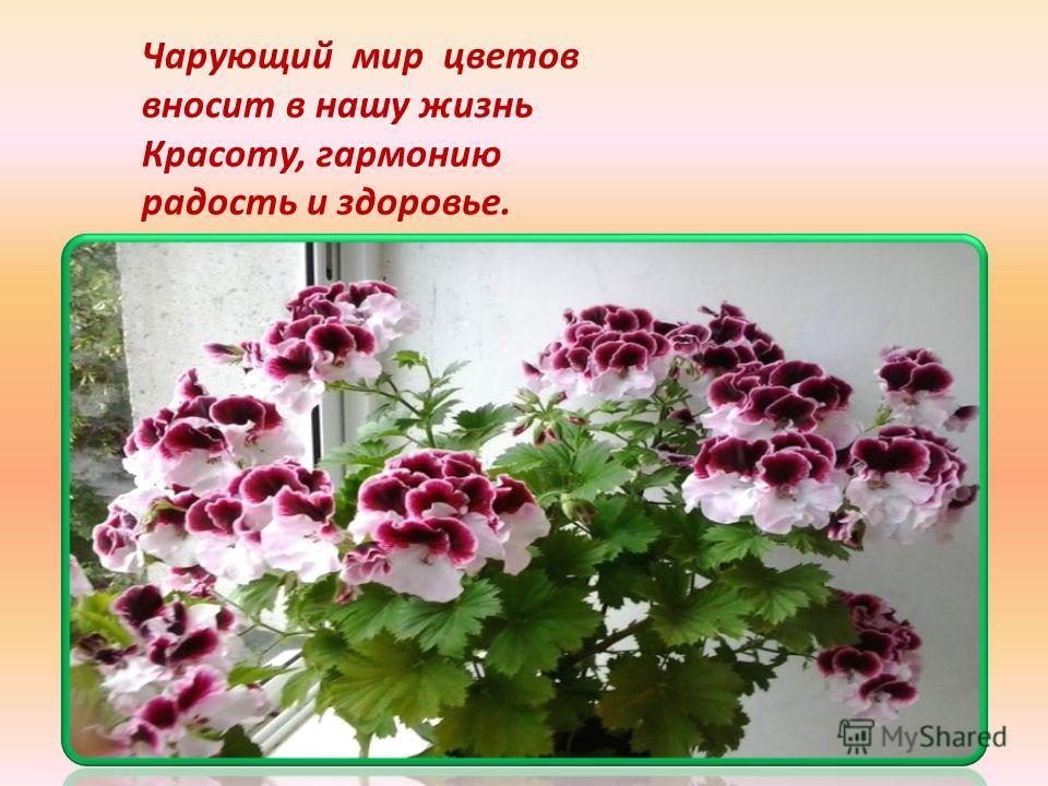 Чарующий мир цветов вносит в нашу жизнь Красоту, гармонию радость и здоровье.
