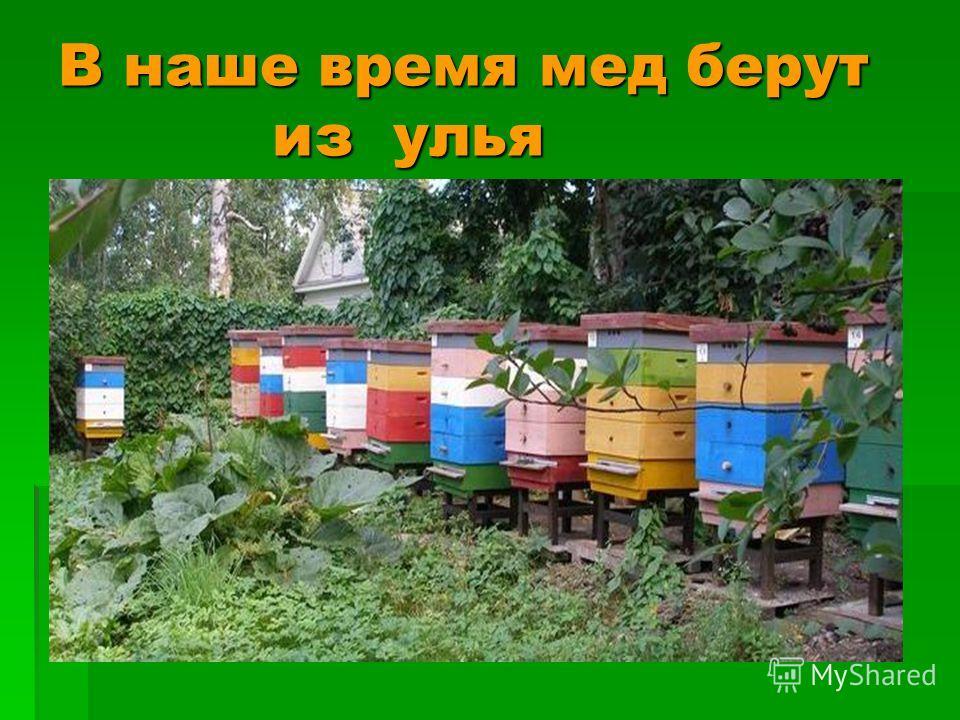 В наше время мед берут из улья