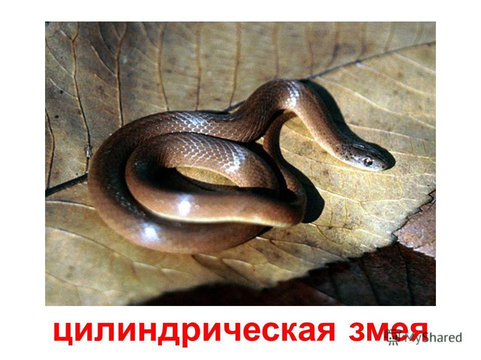 медноголовая змея