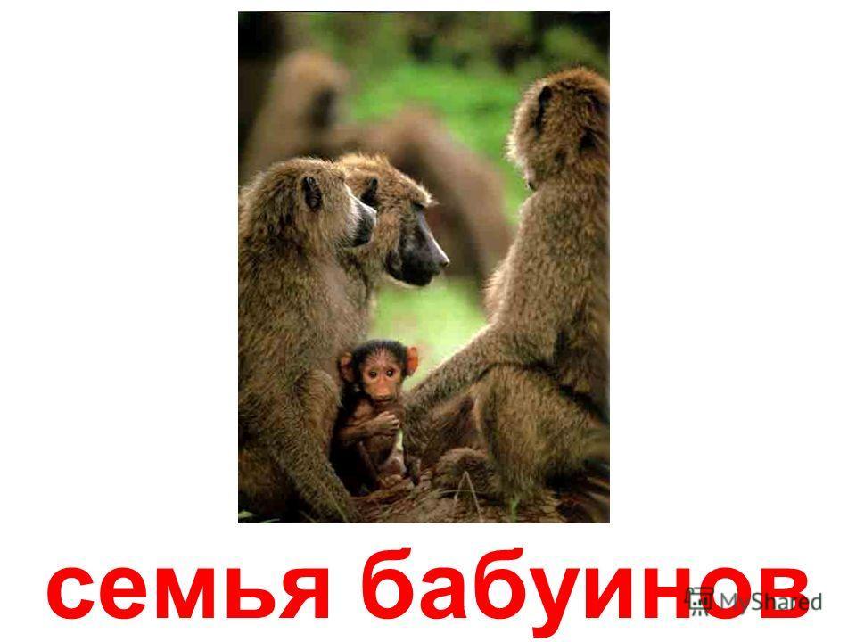 обезьянки-макаки