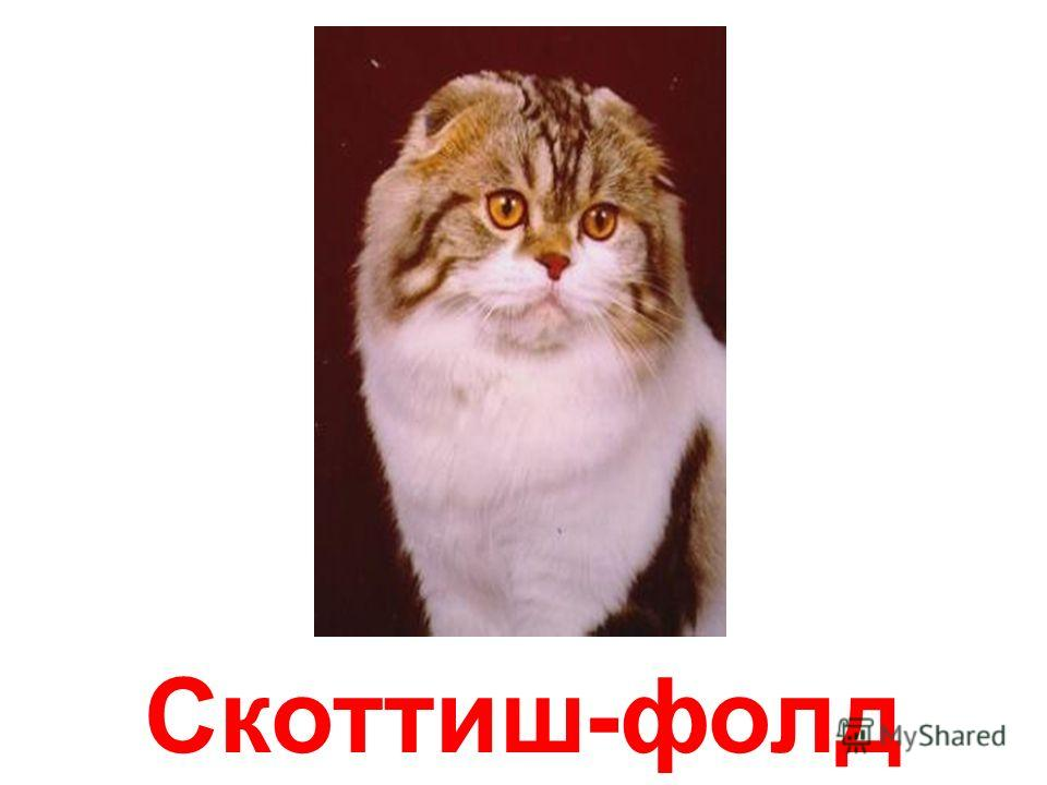Сибирская