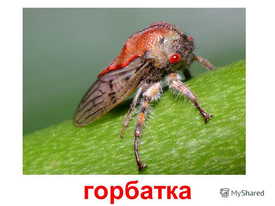 Насекомые муха комар пчела чёрная