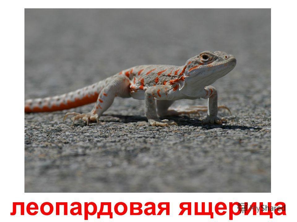 сцинк
