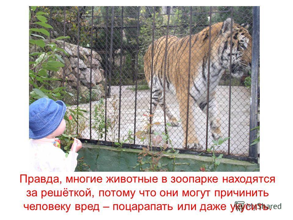 Мы идём в зоопарк, чтобы посмотреть на разных животных – львов, слонов, верблюдов и медведей.