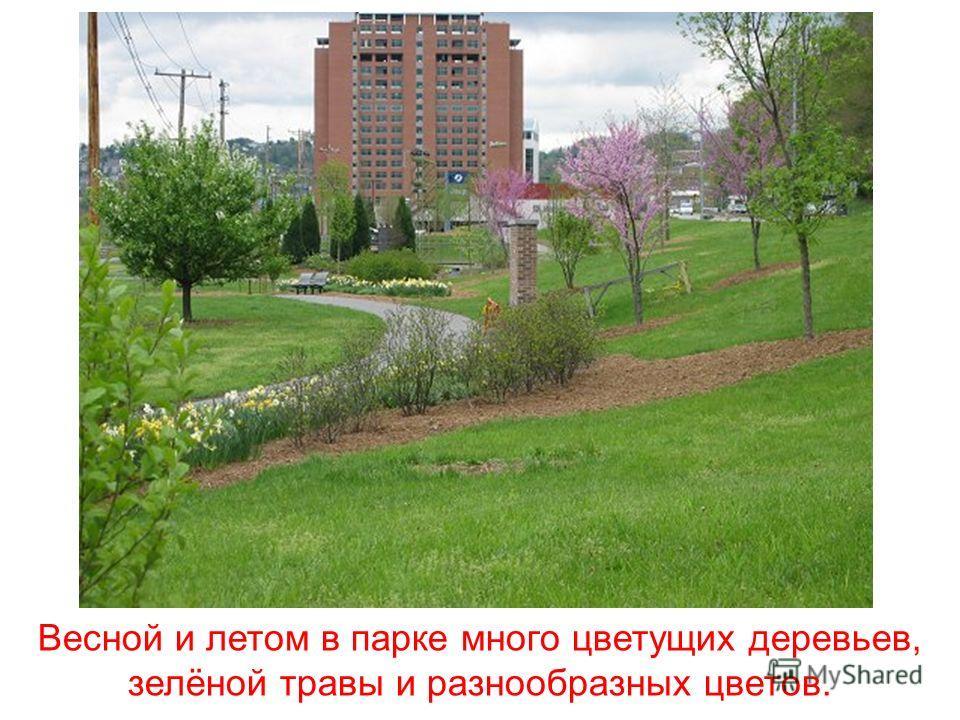 Многие люди любят гулять в парке, где есть аллеи и скамейки для тех, кто хочет посидеть на свежем воздухе.