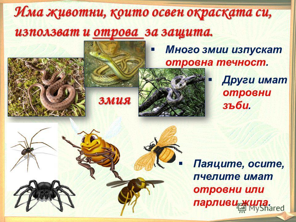 змия Има животни, които освен окраската си, използват и отрова за защита. Много змии изпускат отровна течност. Други имат отровни зъби. Паяците, осите, пчелите имат отровни или парливи жила.
