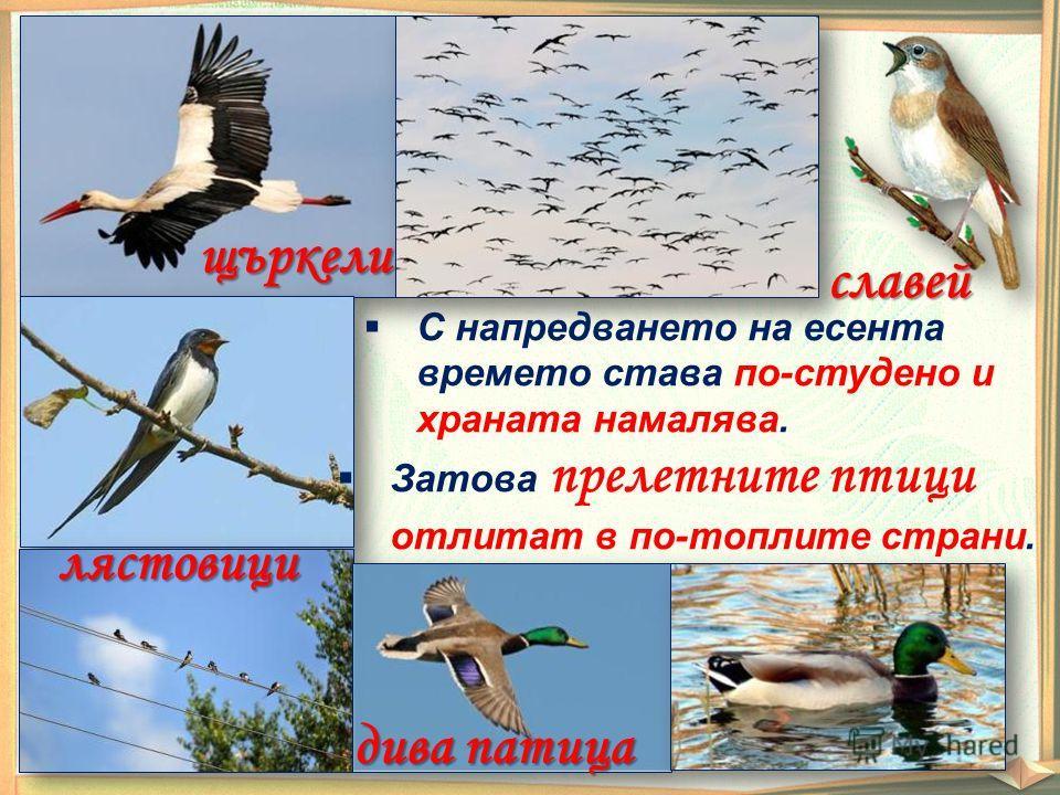 славей щъркели лястовици дива патица С напредването на есента времето става по-студено и храната намалява. Затова прелетните птици отлитат в по-топлите страни.