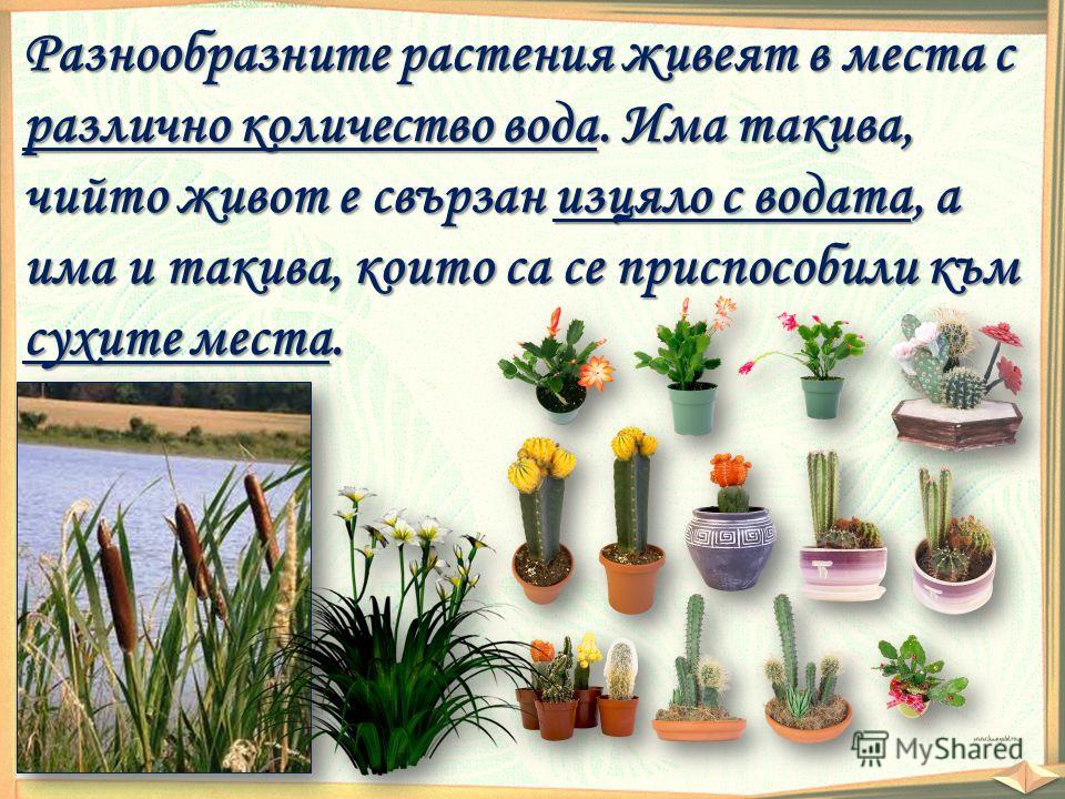 Разнообразните растения живеят в места с различно количество вода. Има такива, чийто живот е свързан изцяло с водата, а има и такива, които са се приспособили към сухите места.