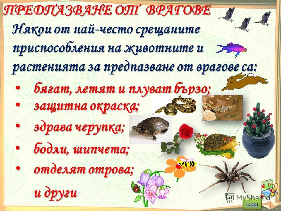 ПРЕДПАЗВАНЕ ОТ ВРАГОВЕ Някои от най-често срещаните приспособления на животните и растенията за предпазване от врагове са: бягат, летят и плуват бързо; бягат, летят и плуват бързо; защитна окраска; защитна окраска; здрава черупка; здрава черупка; бод