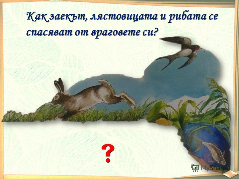 Как заекът, лястовицата и рибата се спасяват от враговете си?