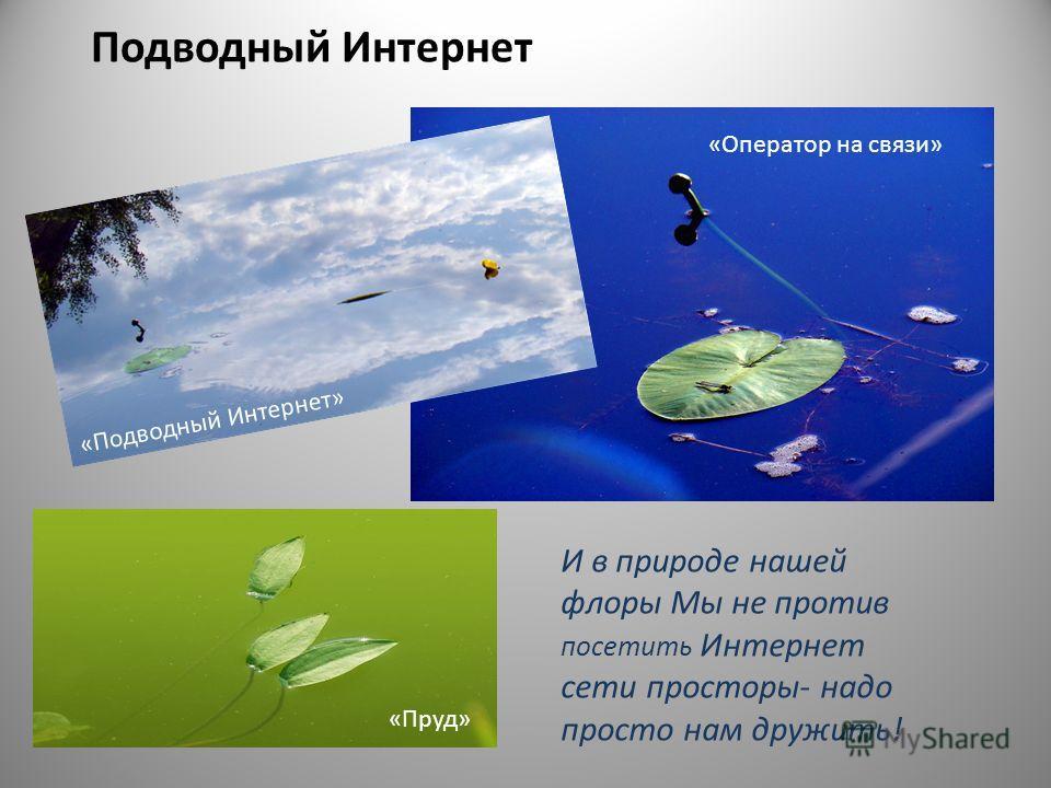 Подводный Интернет И в природе нашей флоры Мы не против посетить Интернет сети просторы- надо просто нам дружить! «Пруд» «Оператор на связи» «Подводный Интернет»