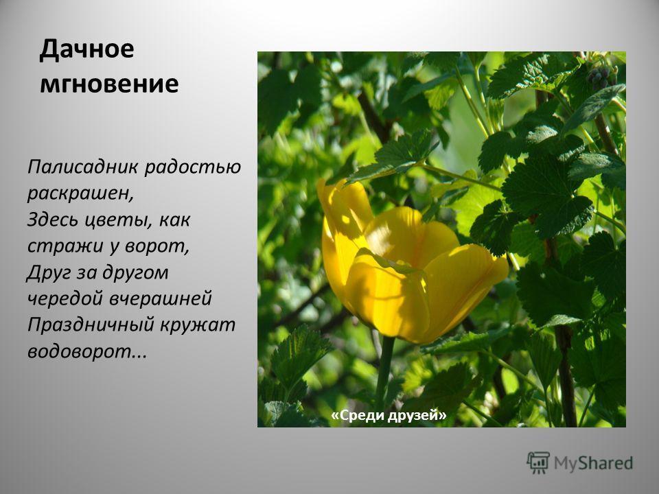 Дачное мгновение Палисадник радостью раскрашен, Здесь цветы, как стражи у ворот, Друг за другом чередой вчерашней Праздничный кружат водоворот... «Среди друзей»