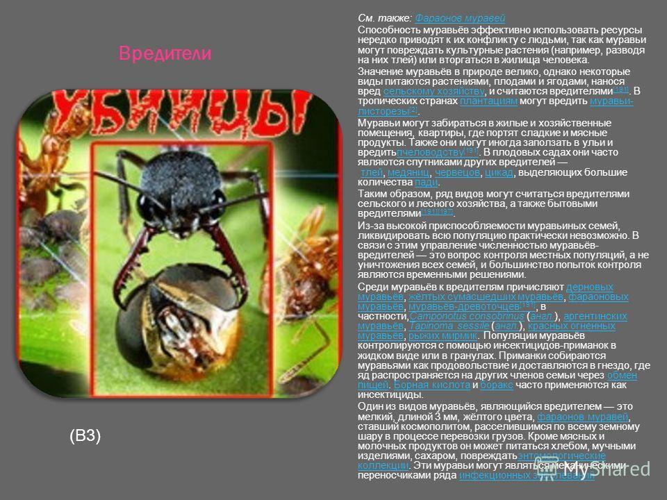 Вредители См. также: Фараонов муравейФараонов муравей Способность муравьёв эффективно использовать ресурсы нередко приводят к их конфликту с людьми, так как муравьи могут повреждать культурные растения (например, разводя на них тлей) или вторгаться в