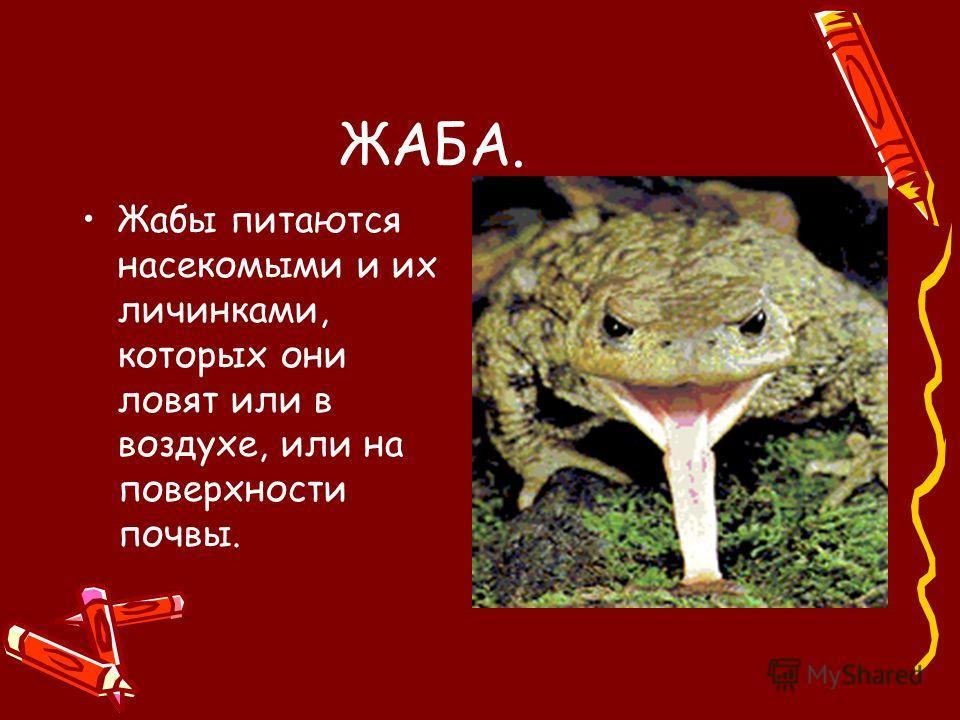 ЖАБА. Жабы питаются насекомыми и их личинками, которых они ловят или в воздухе, или на поверхности почвы.