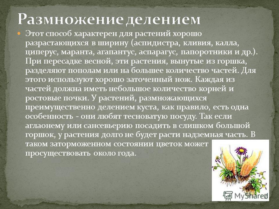 Этот способ характерен для растений хорошо разрастающихся в ширину (аспидистра, кливия, калла, циперус, маранта, агапантус, аспарагус, папоротники и др.). При пересадке весной, эти растения, вынутые из горшка, разделяют пополам или на большее количес
