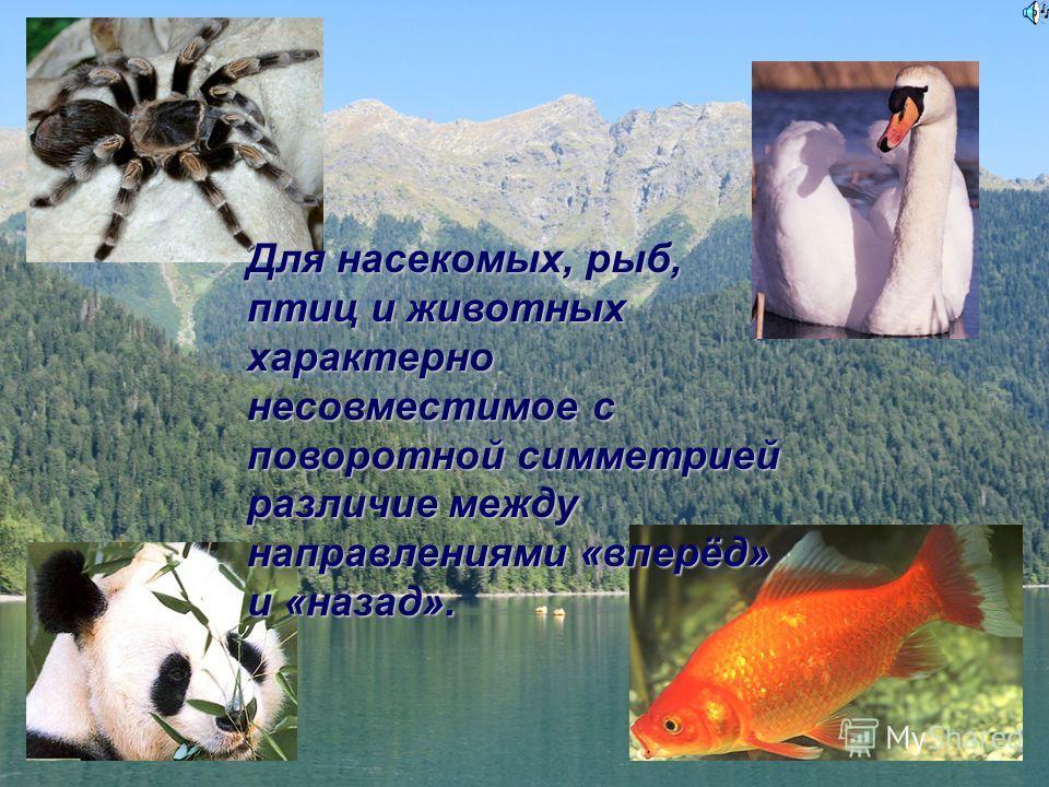 Для насекомых, рыб, птиц и животных характерно несовместимое с поворотной симметрией различие между направлениями «вперёд» и «назад».