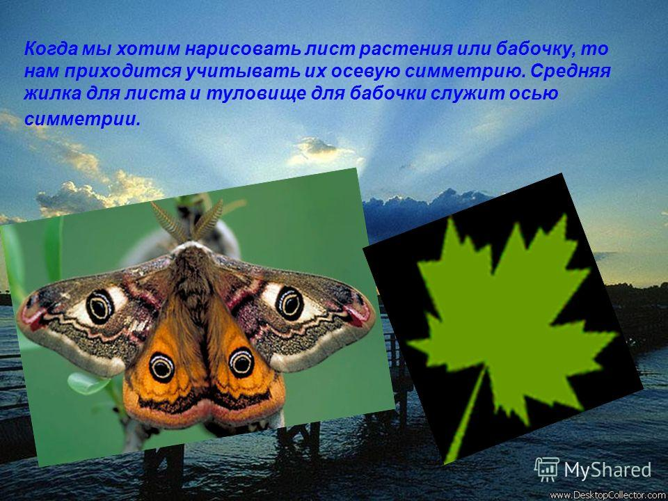 Когда мы хотим нарисовать лист растения или бабочку, то нам приходится учитывать их осевую симметрию. Средняя жилка для листа и туловище для бабочки служит осью симметрии.