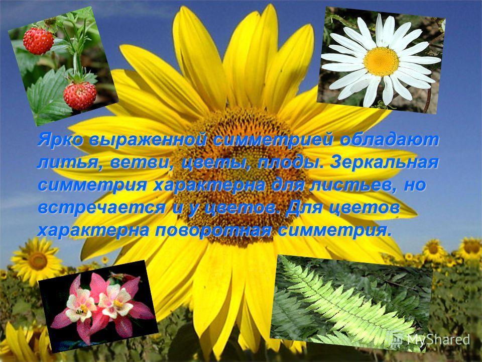 Ярко выраженной симметрией обладают литья, ветви, цветы, плоды. Зеркальная симметрия характерна для листьев, но встречается и у цветов. Для цветов характерна поворотная симметрия.