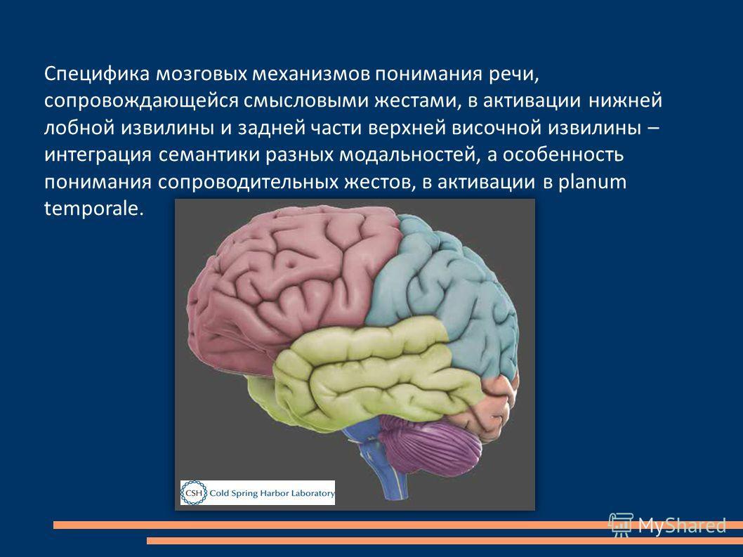 Специфика мозговых механизмов понимания речи, сопровождающейся смысловыми жестами, в активации нижней лобной извилины и задней части верхней височной извилины – интеграция семантики разных модальностей, а особенность понимания сопроводительных жестов