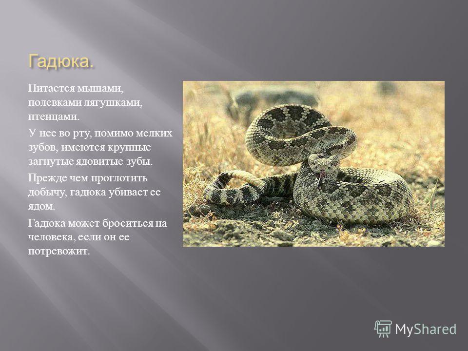 Прыткая ящерица Живет на опушках лесов, в оврагах, на солнечных пригорках. Она быстро бегает. На ногах у нее длинные пальцы с острыми коготками. Поэтому она легко взбирается на камни, пни деревьев. Питаются ящерицы насекомыми. Ящерица может обламыват