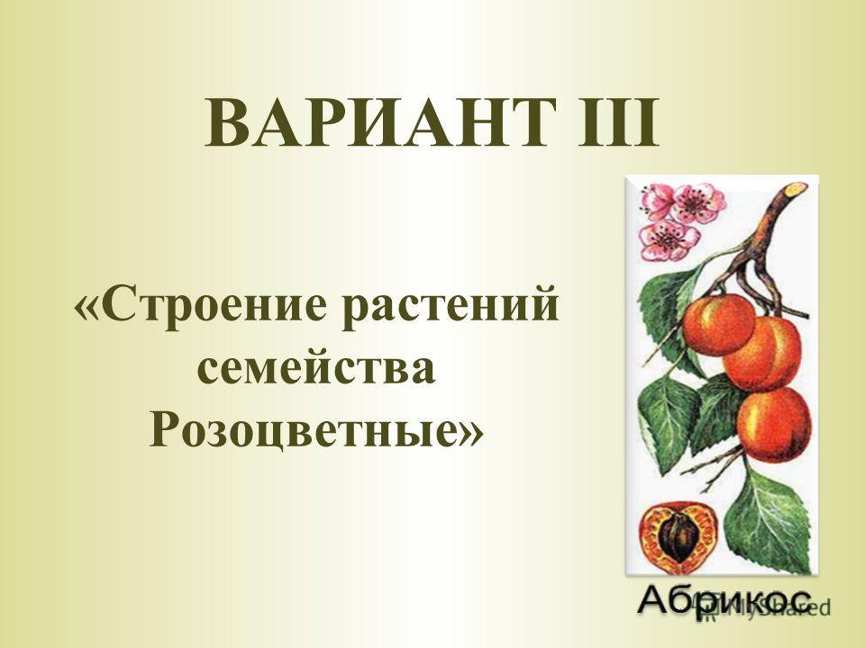 «Строение растений семейства Розоцветные» ВАРИАНТ III