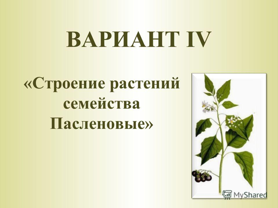 «Строение растений семейства Пасленовые» ВАРИАНТ IV