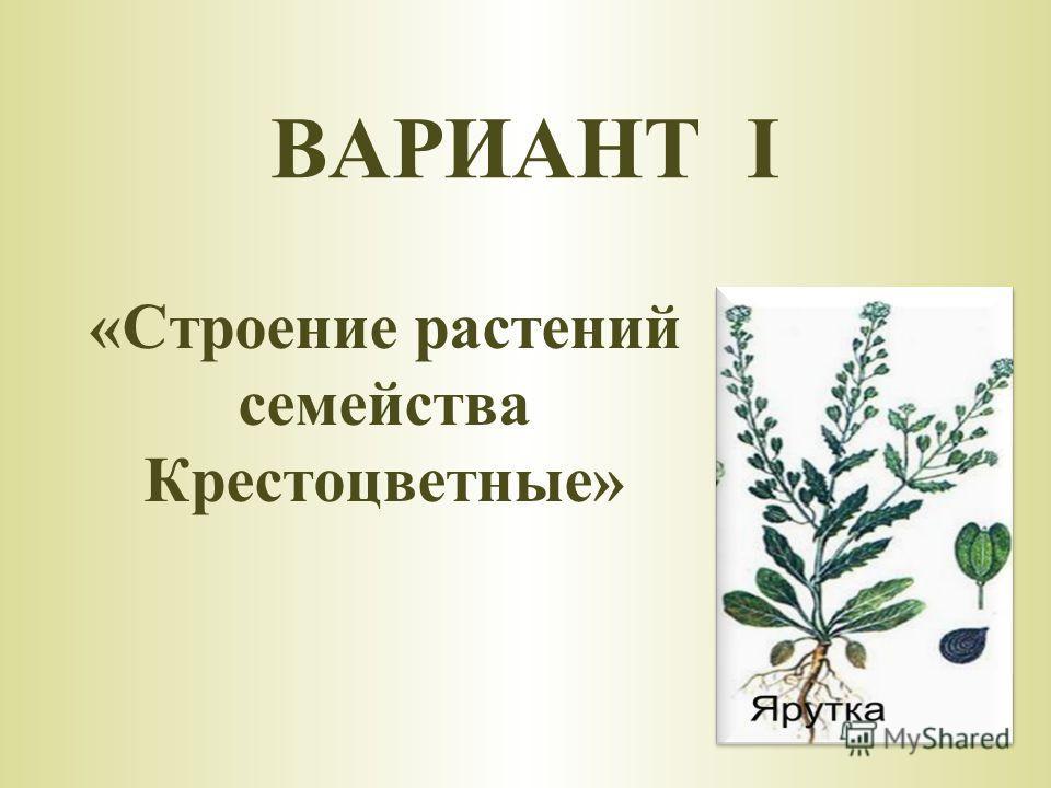 «Строение растений семейства Крестоцветные» ВАРИАНТ I