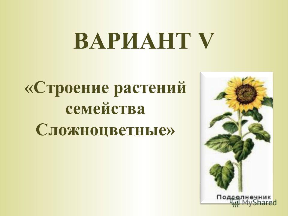 «Строение растений семейства Сложноцветные» ВАРИАНТ V