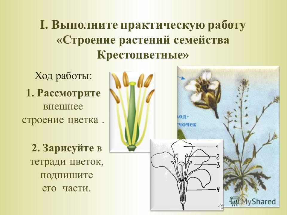 I. Выполните практическую работу «Строение растений семейства Крестоцветные» Ход работы: 1. Рассмотрите внешнее строение цветка. 2. Зарисуйте в тетради цветок, подпишите его части.