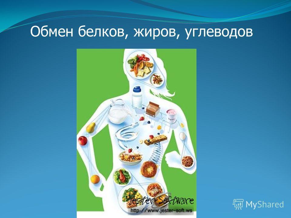 Обмен белков, жиров, углеводов