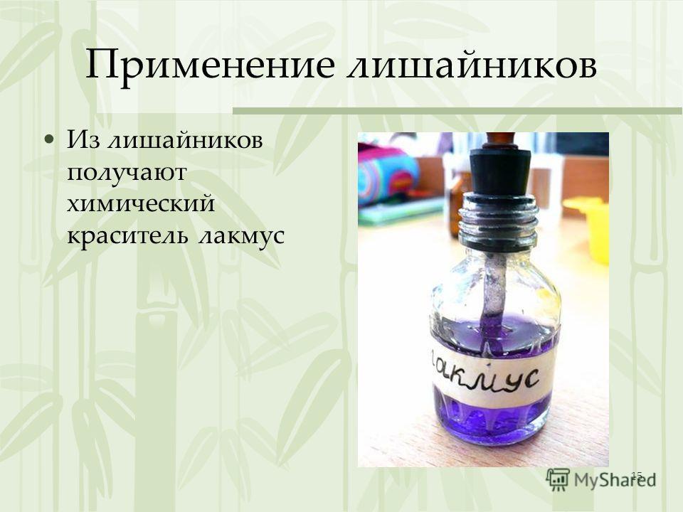 15 Применение лишайников Из лишайников получают химический краситель лакмус