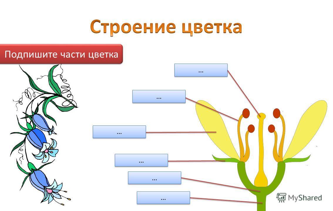 Подпишите части цветка … … … … … … … … … … … …