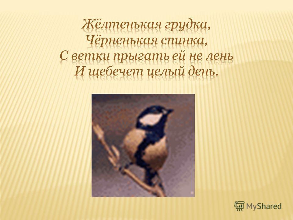 Снегирь С наступлением холодов, с первым робким снежком к нам на зимовку прилетают с севера снегири. От слова снег и птице название дали – снегирь. Снегирь – самая красивая зимняя птица. А вот песня у него тихая, с грустинкой, словно полозья саней по