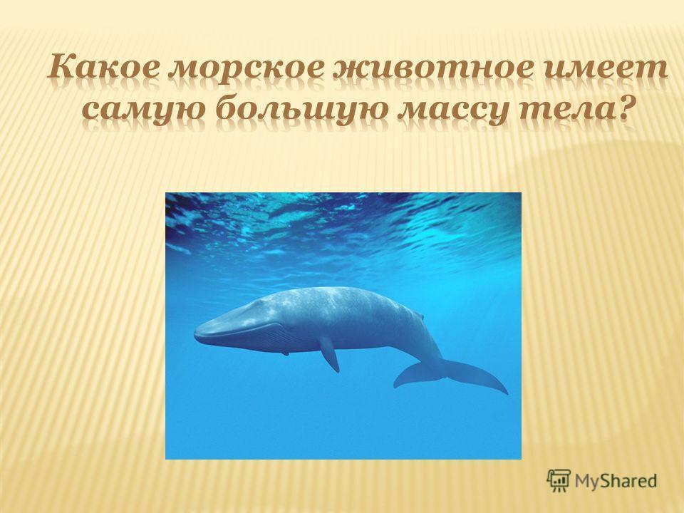 ЖУК - ГОЛИАФ ВЕС – 100 Г.