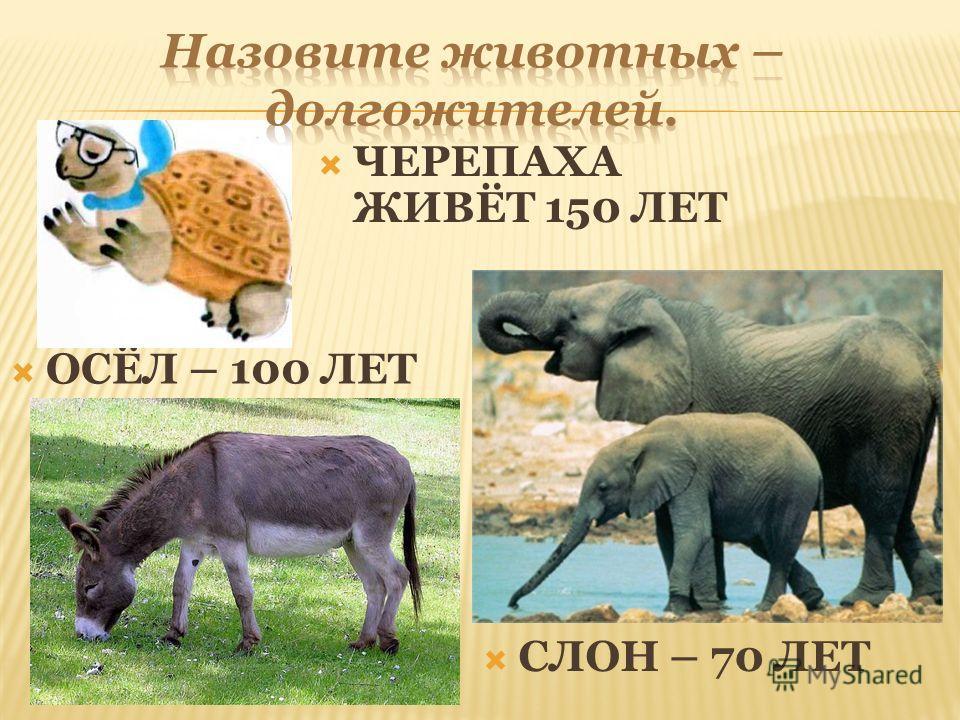 ГЕПАРД СКОРОСТЬ БЕГА – 105-112 КМ/Ч