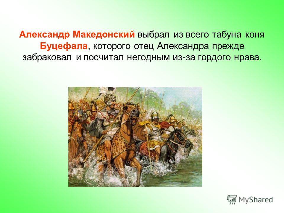 Александр Македонский выбрал из всего табуна коня Буцефала, которого отец Александра прежде забраковал и посчитал негодным из-за гордого нрава.